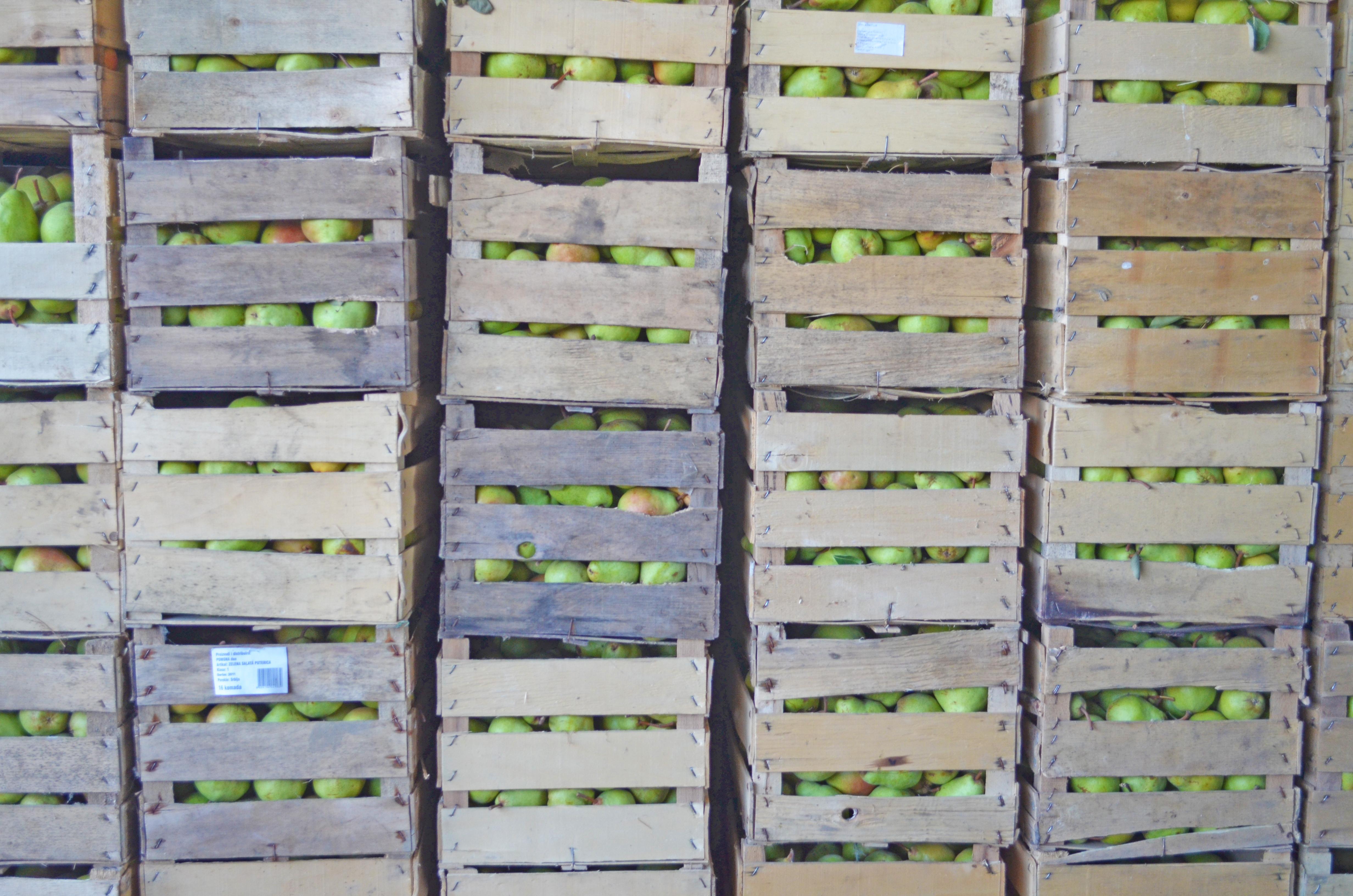 Pears in Crates Klenak