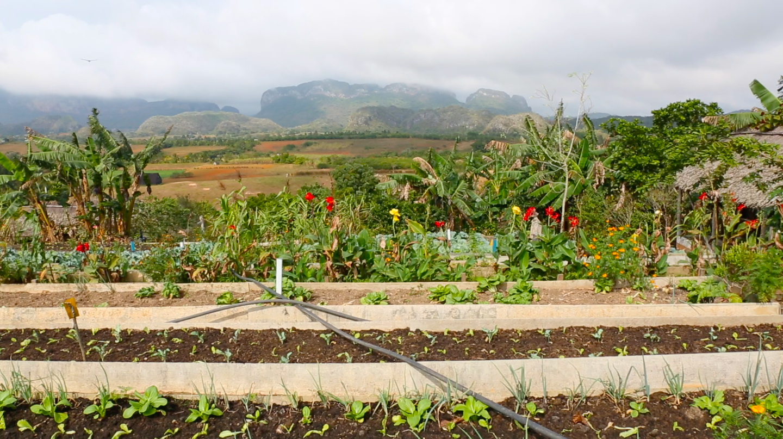 Finca Agroecologica El Paraiso