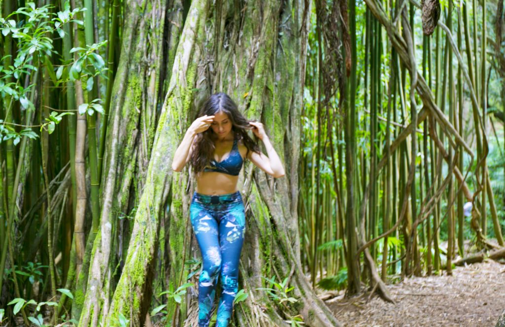 Manoa Falls Banyan Tree Courtney Scott