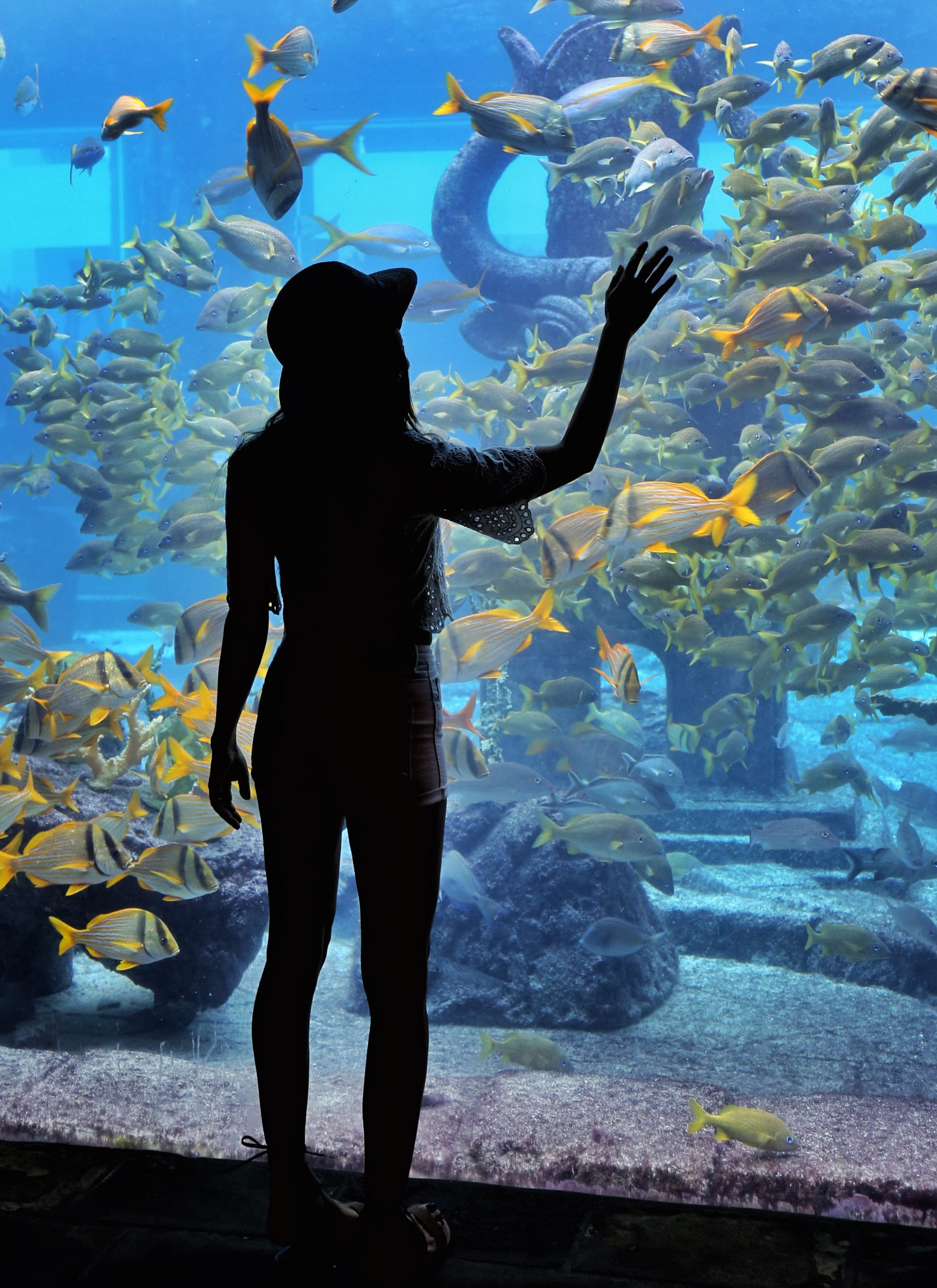 Atlantis-Paradise-Island-Aquarium-Courtney-Scott-