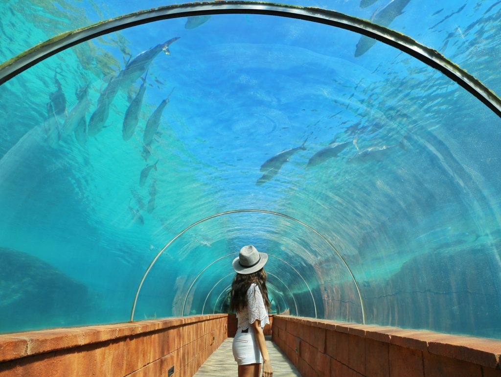 Atlantis-Resort-Predators-Cove-Courtney-Scott