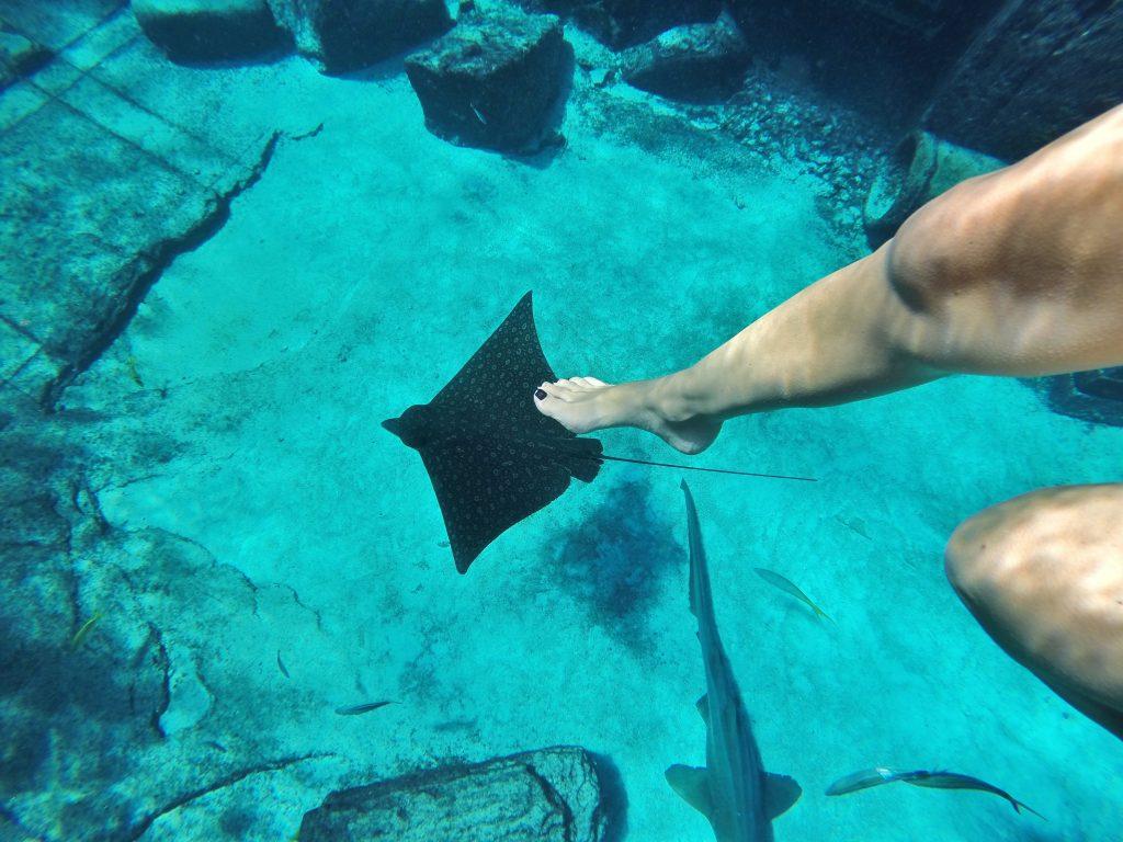 Atlantis-Resort-Snorkeling-The-Ruins