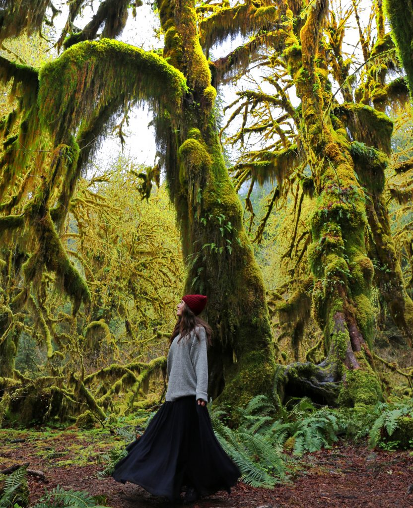 Hoh-Rainforest-Courtney-Scott