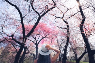 Where to See Cherry Blossoms in NYC